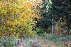 叶子秋天在11月 库存图片