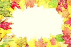 叶子秋天框架 库存照片