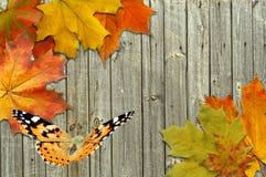 叶子秋天槭树和蝴蝶 免版税库存照片