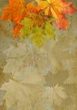 叶子秋天槭树grunge 免版税库存照片