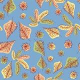 叶子秋天 鞋带叶子 在蓝色背景的构成 无缝的模式 库存照片