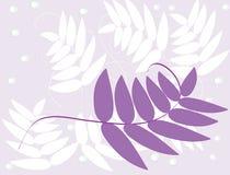 叶子紫色 免版税库存照片