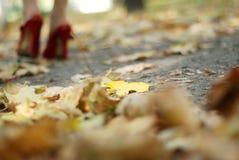 叶子红色鞋子 免版税库存照片