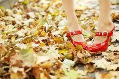 叶子红色鞋子 免版税库存图片