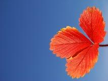 叶子红色 免版税库存照片