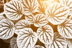 叶子纹理图形设计的样式背景 图库摄影