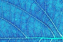 叶子纹理图形设计的样式背景 免版税库存照片