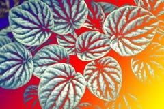 叶子纹理图形设计的样式背景 免版税库存图片