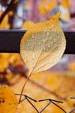 叶子纹理在秋天 免版税库存图片