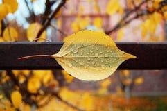 叶子纹理在秋天 图库摄影