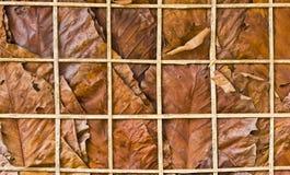 叶子纹理墙壁 免版税图库摄影