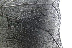 叶子纹理微照片  免版税库存图片