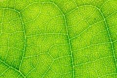 叶子纹理或叶子背景网站模板、明信片、装饰和农业构思设计的 图库摄影