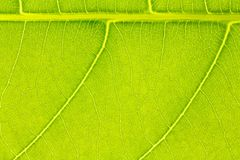 叶子纹理或叶子背景网站模板、明信片、装饰和农业构思设计的 库存图片