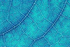 叶子纹理或叶子背景设计的 免版税库存照片