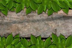 叶子纹理木头 免版税库存照片