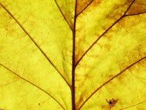 叶子纹理难看的东西样式 库存图片