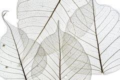 叶子纹理 库存图片