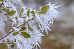 叶子细节的树冰水晶  免版税库存照片