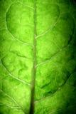 叶子结构树 库存照片