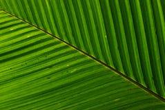 叶子结构 库存照片