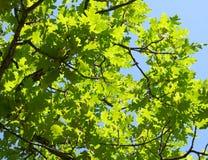 叶子绿色 免版税库存照片
