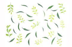 叶子美妙地一起被排行 免版税图库摄影