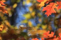 叶子背景在秋天 免版税库存图片