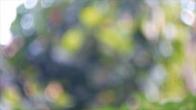 叶子背景抽象绿色bokeh  股票视频
