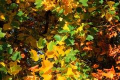 叶子背景用不同的颜色 库存照片