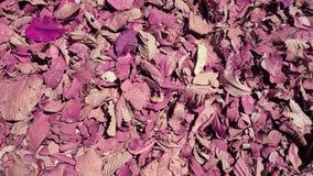 叶子背景的颜色 免版税库存图片