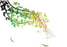 叶子背景 库存图片