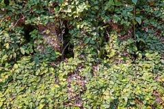 叶子背景 图库摄影