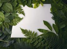叶子自然叶子有拷贝空间的文本的 库存图片