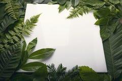 叶子自然叶子有拷贝空间的文本的 库存照片
