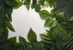 叶子自然叶子有拷贝空间的文本的 免版税库存图片