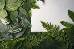 叶子自然叶子有拷贝空间的文本的 图库摄影