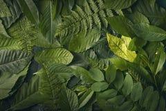 叶子自然叶子,自然概念 免版税库存图片
