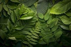 叶子自然叶子,自然概念 免版税库存照片