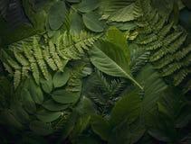 叶子自然叶子,自然概念 库存图片