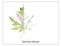 叶子艺术水彩传染媒介例证 免版税库存照片