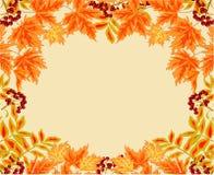 从叶子花楸浆果和槭树秋天题材传染媒介的框架 库存图片