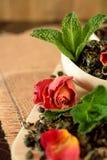 叶子茶,干玫瑰色和新鲜薄荷 图库摄影