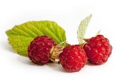 叶子莓 免版税库存照片