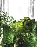 叶子莳萝分支在一个罐头的水中盐溶绿色 免版税库存照片