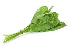 叶子菠菜 库存图片