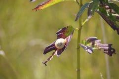 叶子蜗牛 免版税库存图片