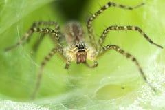 叶子蜘蛛 免版税图库摄影