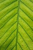 叶子表面 库存图片