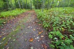 叶子被撒布的道路穿过充满活力的绿色森林 免版税库存图片